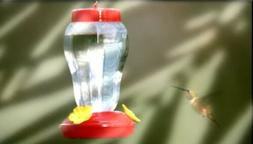 Garden Collection Hummingbird Feeders Clear, Red NEW
