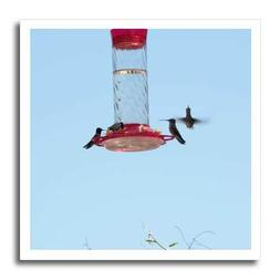 3dRose Jos Fauxtographee- Hummingbirds at Feeder - Four Tiny