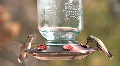 More Birds Glass Hummingbird Feeding Stations, 25-Ounce
