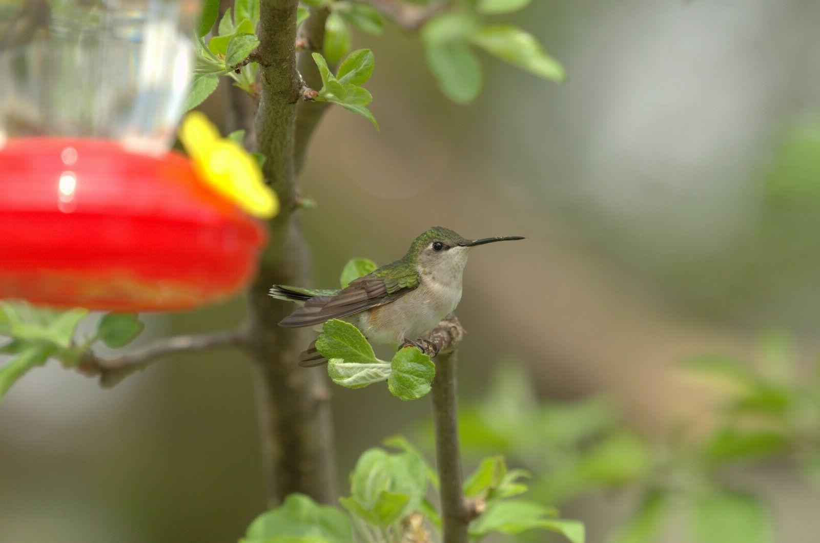 Set of Collection Hummingbird