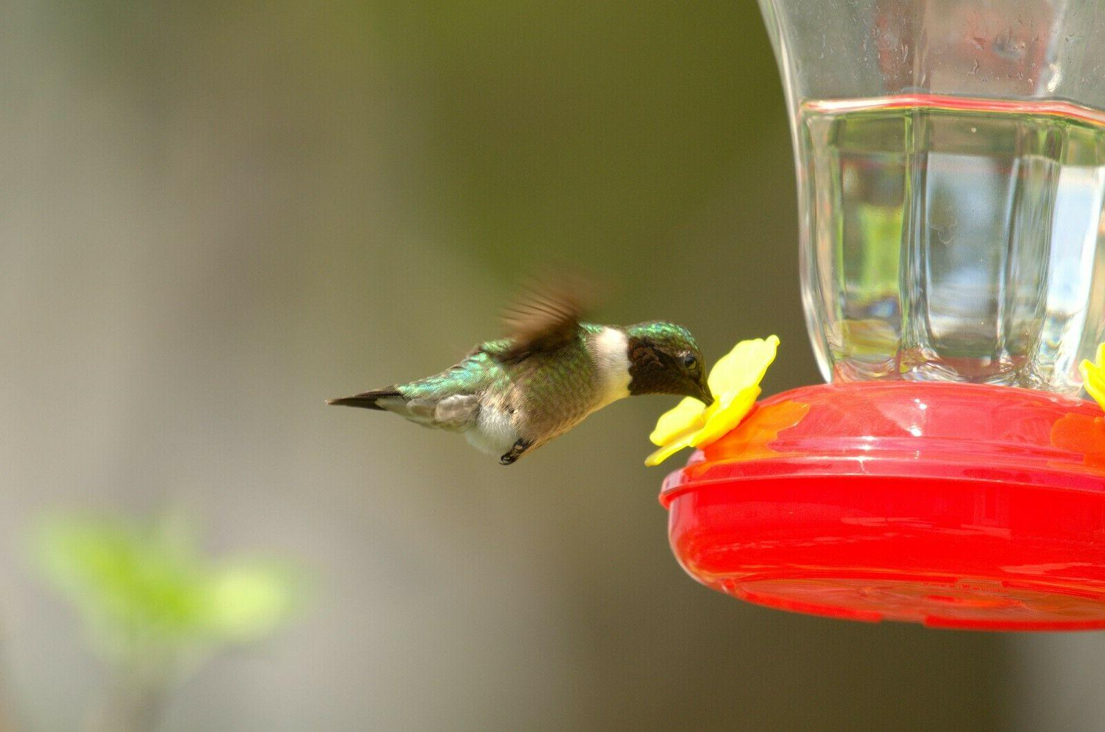 Set of Three Collection Hummingbird