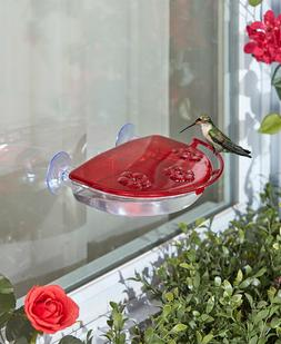 Window Hummingbird Feeder Perch Nectar Bird Wildlife Food Ou
